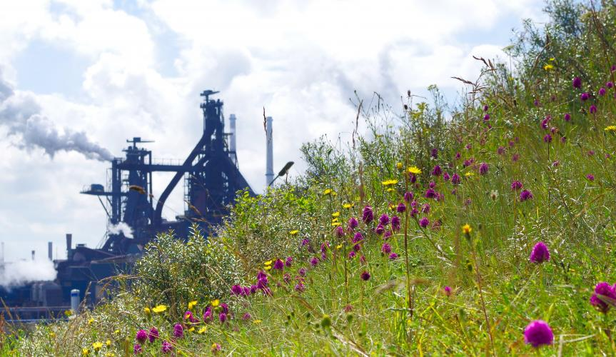 tata-steel-ijmuiden-nature-blast-furnace